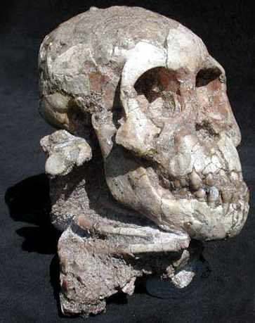THE FOSSILIZED REMAINS OF 'LUCY'S BABY' ARE ENTIRELY THOSE OF A MONKEY.