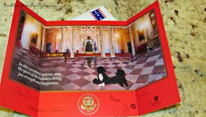 PRESIDENT OBAMA, THE PROFESSED CHRISTIAN, DARED NOT  SEND A WHITE HOUSE CHRISTMAS CARD DEPICTING THE  NATVITY. INSTEAD HE REPLACED THE VIRGIN MARY AND THE CHRIST CHILD WITH  THE OBAMA FAMILY DOGS.